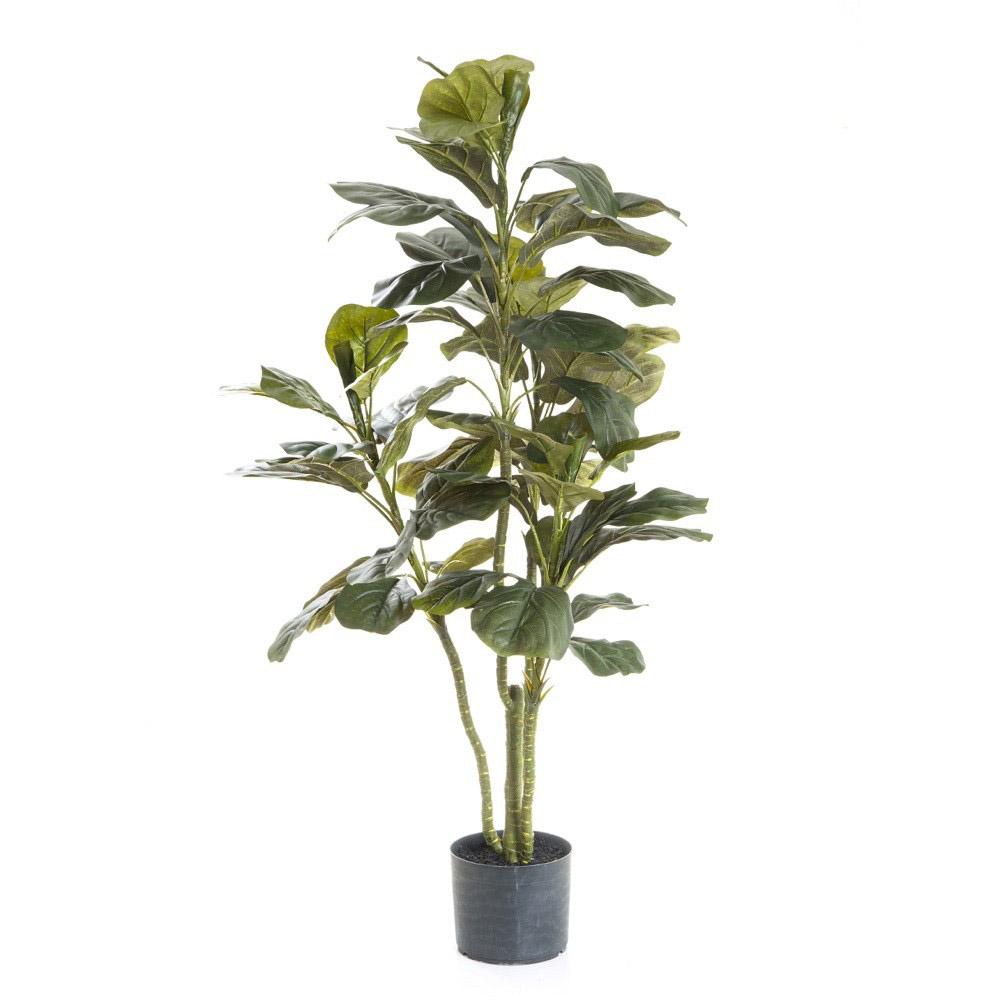 Fiddle Leaf Fig Tree Real Trees Veggie Gardening Tips