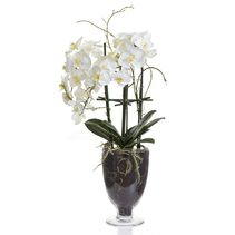 Phal Orchid in Glass Vase With Stand