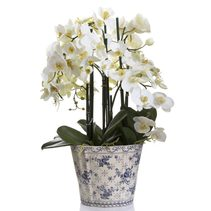 Phal Orchid in Chinese Pot