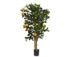 Golden Orange Tree