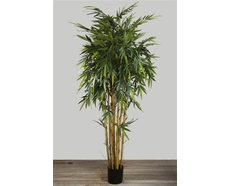 New Bamboo Tree