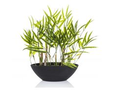 Bamboo Bush In Dark Brown Pot