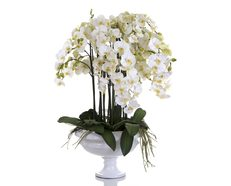 Orchid Phalaenopsis in White Pot